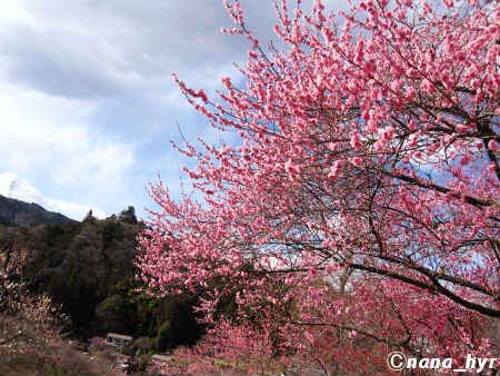 2012-03-29-09.jpg