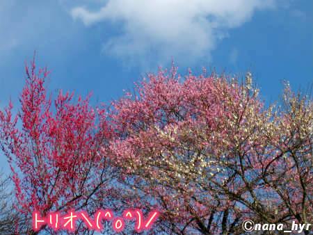2012-03-29-14.jpg
