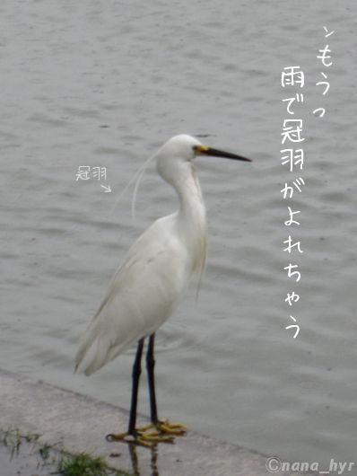 2012-06-14-03.jpg