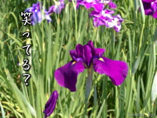 2012-06-15-07.jpg