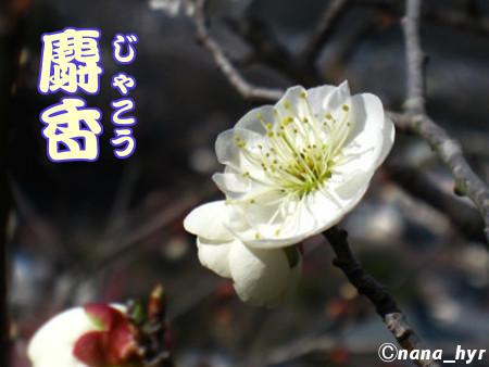 2012-03-29-07.jpg