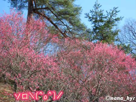 2012-03-29-13.jpg