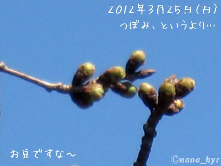 2012-03-30-06.jpg
