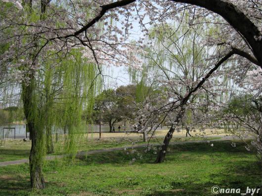 2012-04-12-07.jpg