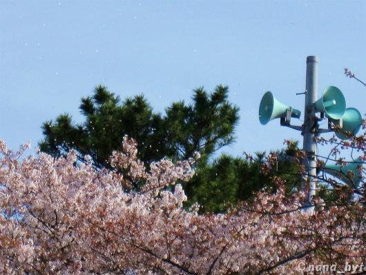 2012-04-18-08.jpg
