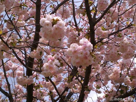 2012-04-19-11.jpg