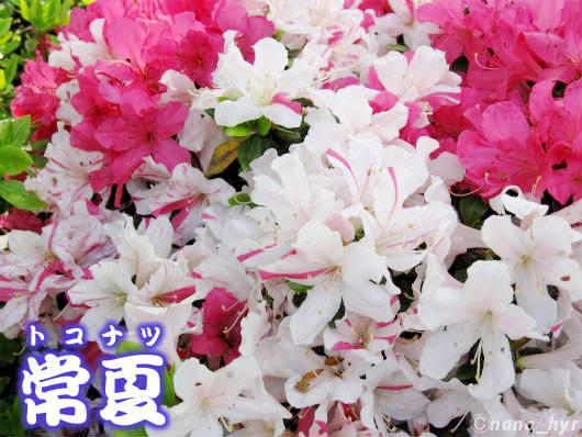 2012-05-09-06.jpg