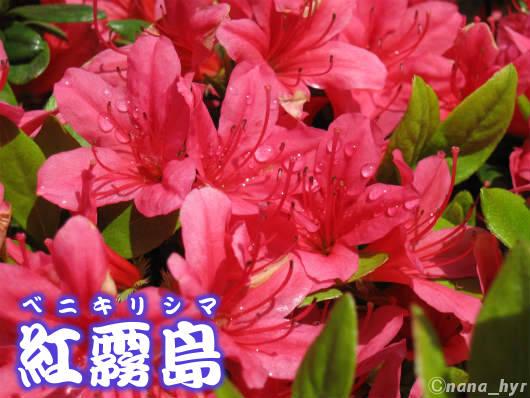 2012-05-09-09.jpg